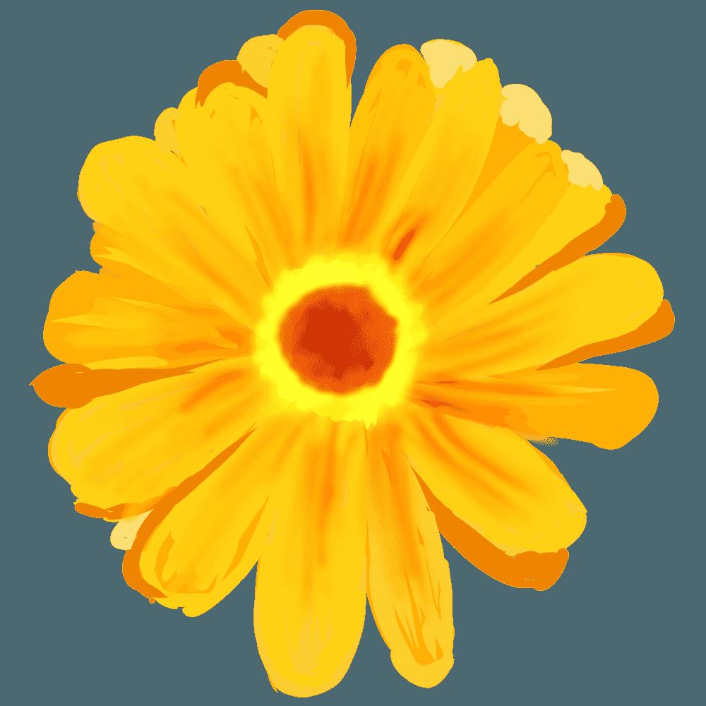 黄色の水彩アートガーベライラスト
