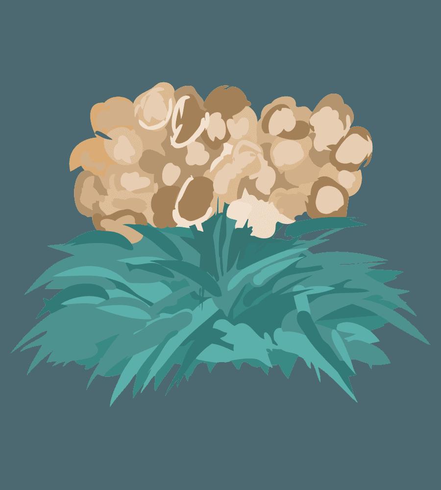 ガーデニング用薄茶色の花のイラスト