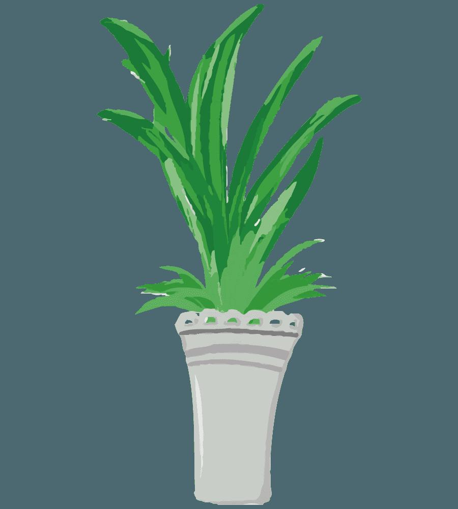 でかい葉っぱの植物のイラスト
