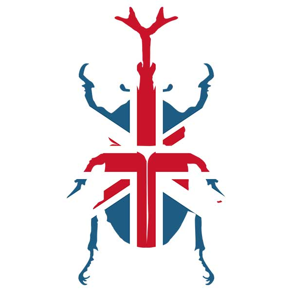 イギリスビートルデザイン
