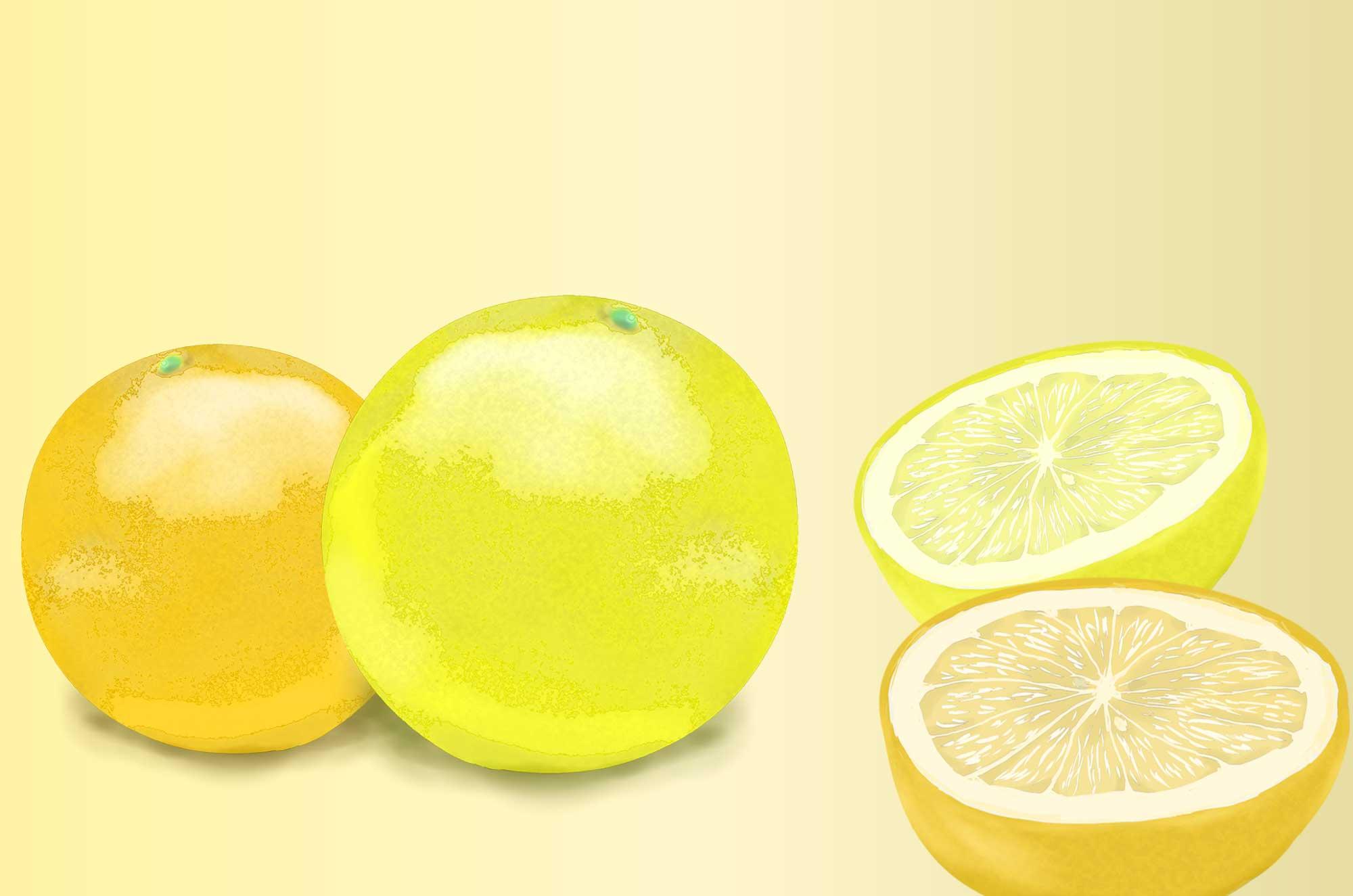 グレープフルーツのイラスト | オレンジ無料素材も