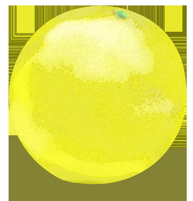かわいいグレープフルーツのイラスト