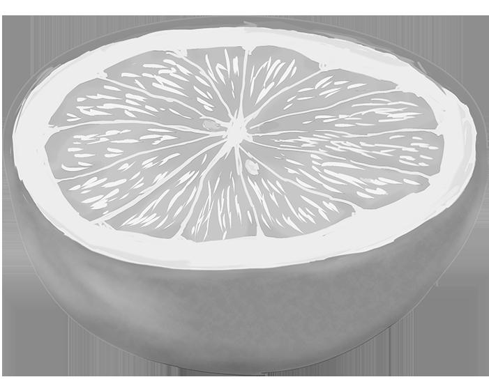 白黒の輪切りにしたグレープフルーツのイラスト