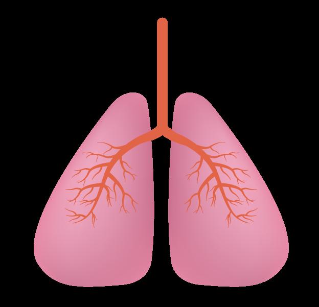 シンプルな肺のイラスト