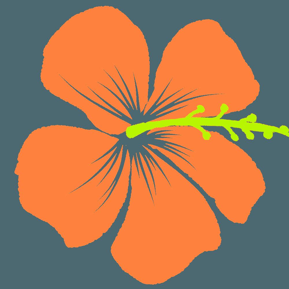 橙色のハイビスカスイラスト
