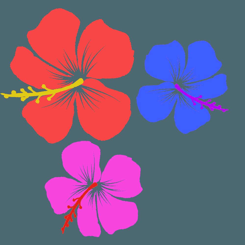 咲き乱れるハイビスカスイラスト