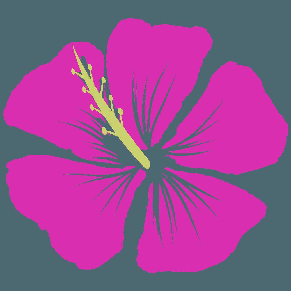濃いピンク色のハイビスカスイラスト