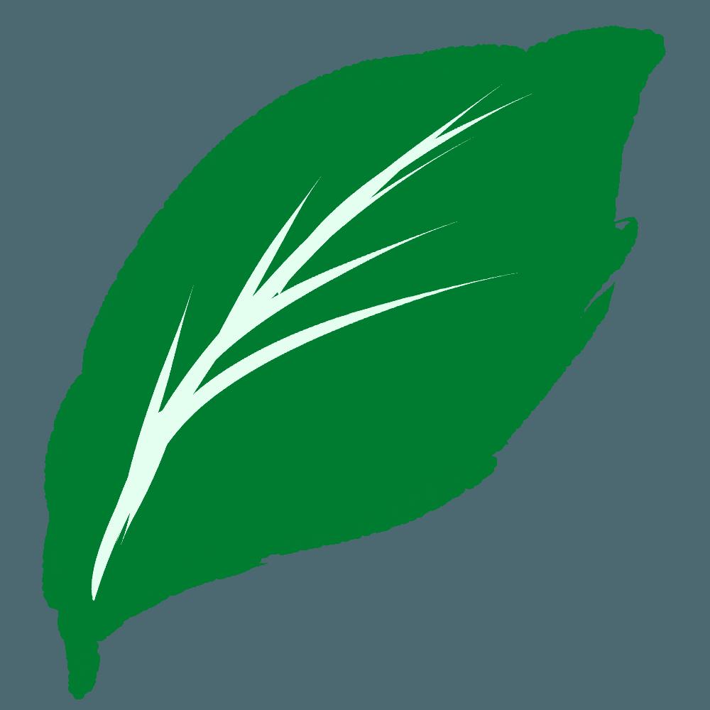 ハイビスカスの葉っぱのイラスト