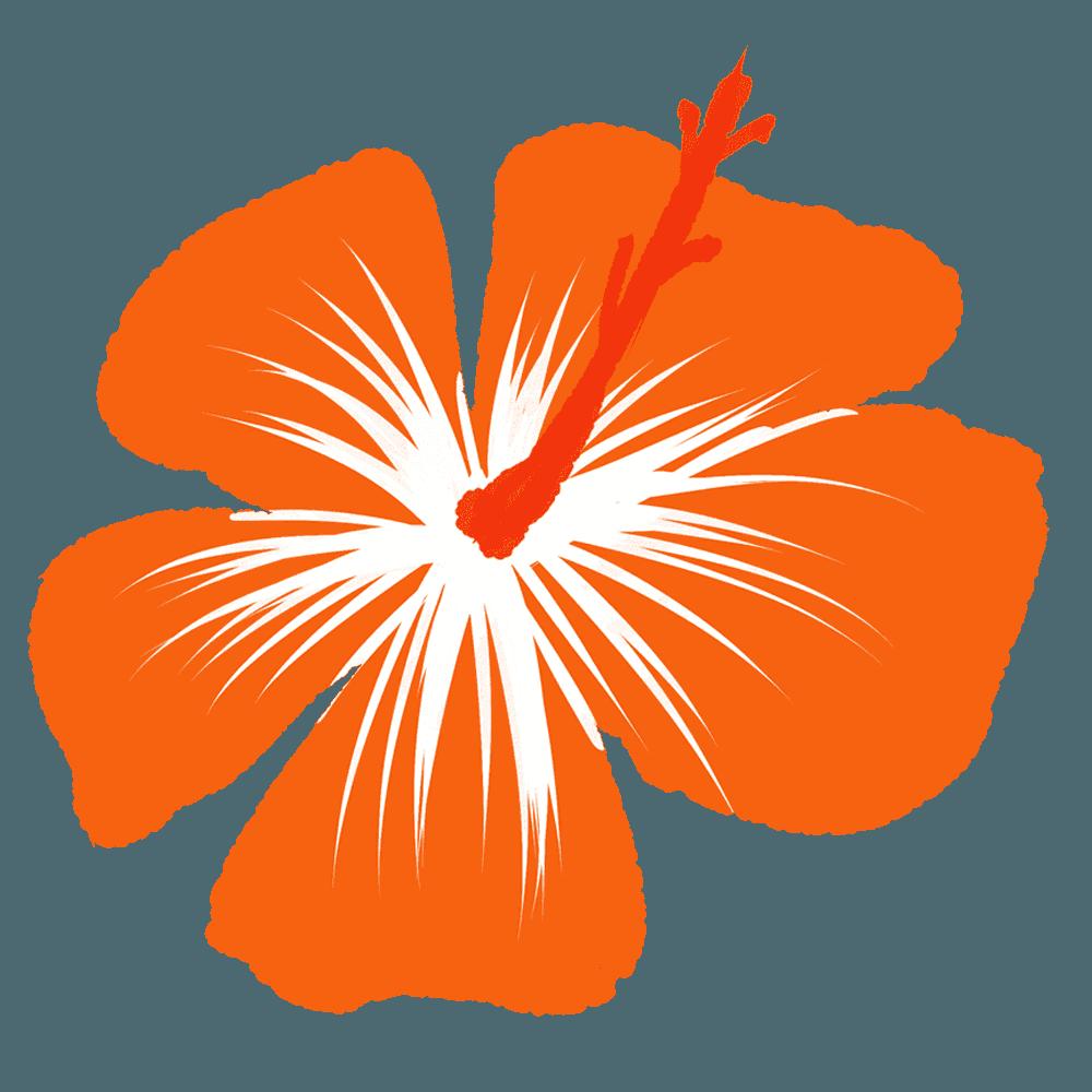 オレンジ色のハイビスカスイラスト