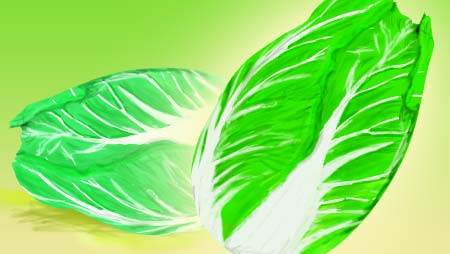 白菜のイラスト