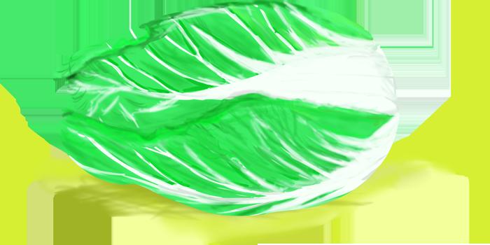横向きに置かれた白菜のイラスト