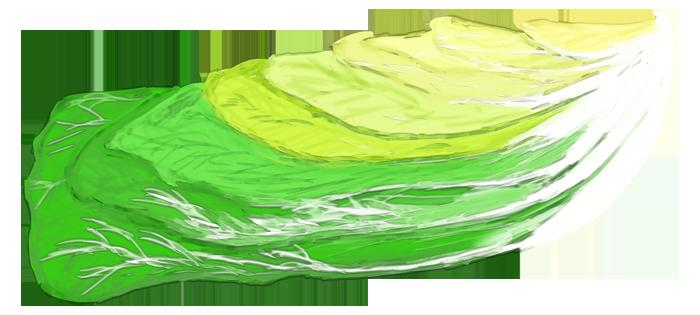 白菜を三分の一にカットしたイラスト