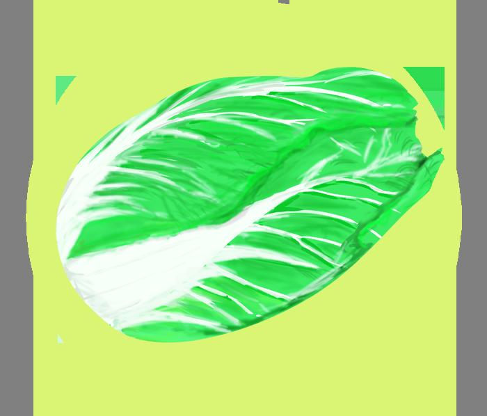 挿絵イメージの白菜イラスト