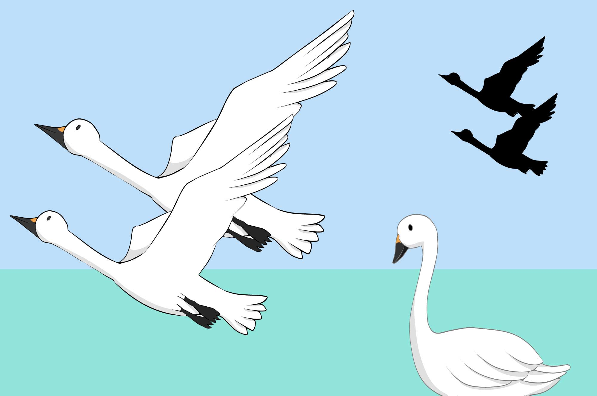 可愛い白鳥のイラスト - 無料の鳥イメージフリー素材