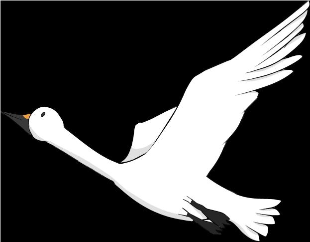 飛び立つ白鳥のイラスト
