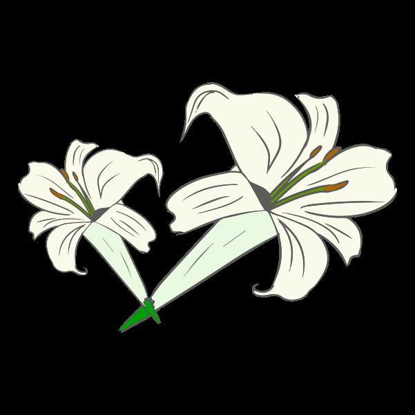 ゆりの花のイラスト