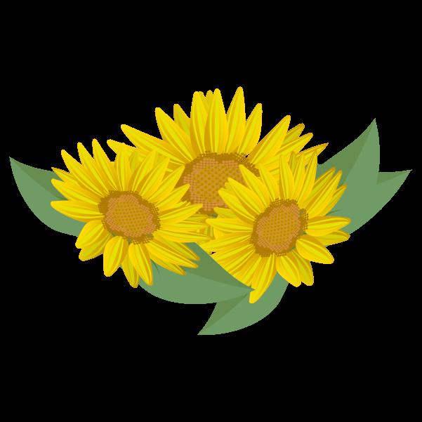 ひまわりの花のイラスト