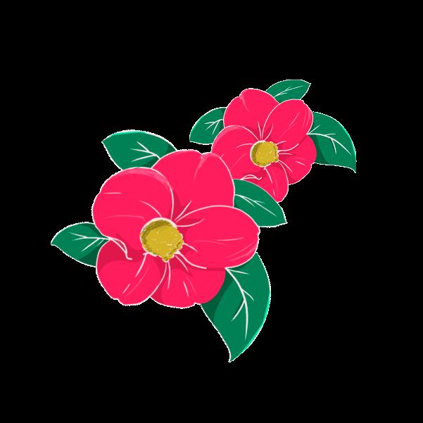 つばきの花のイラスト