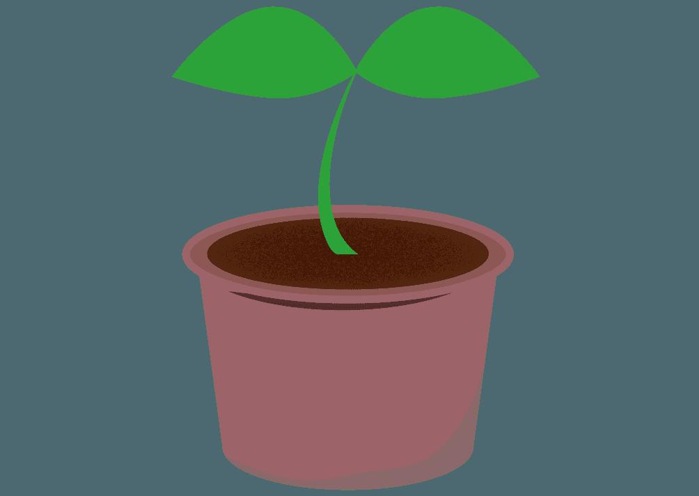 植木鉢に入った新芽のイラスト