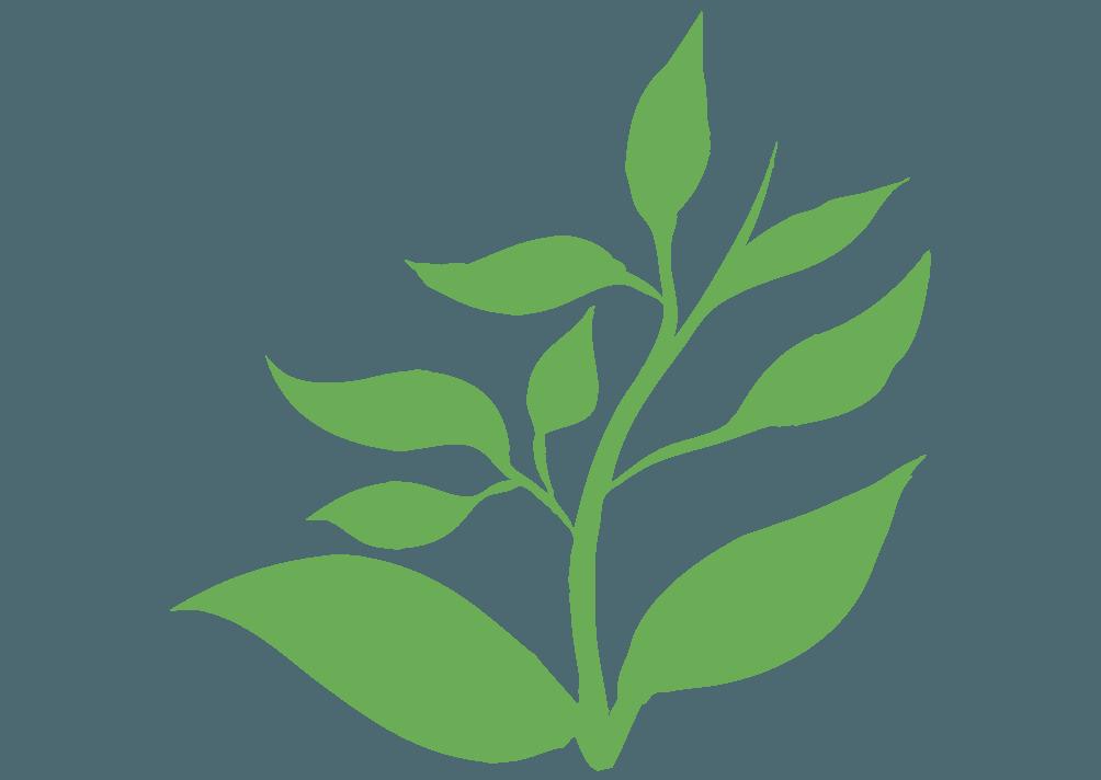 上に向かって伸びる葉のイラスト
