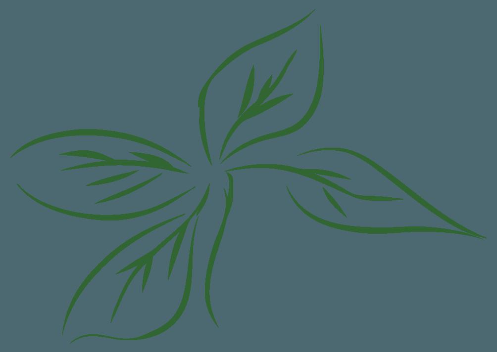 線画で描く葉っぱイラスト