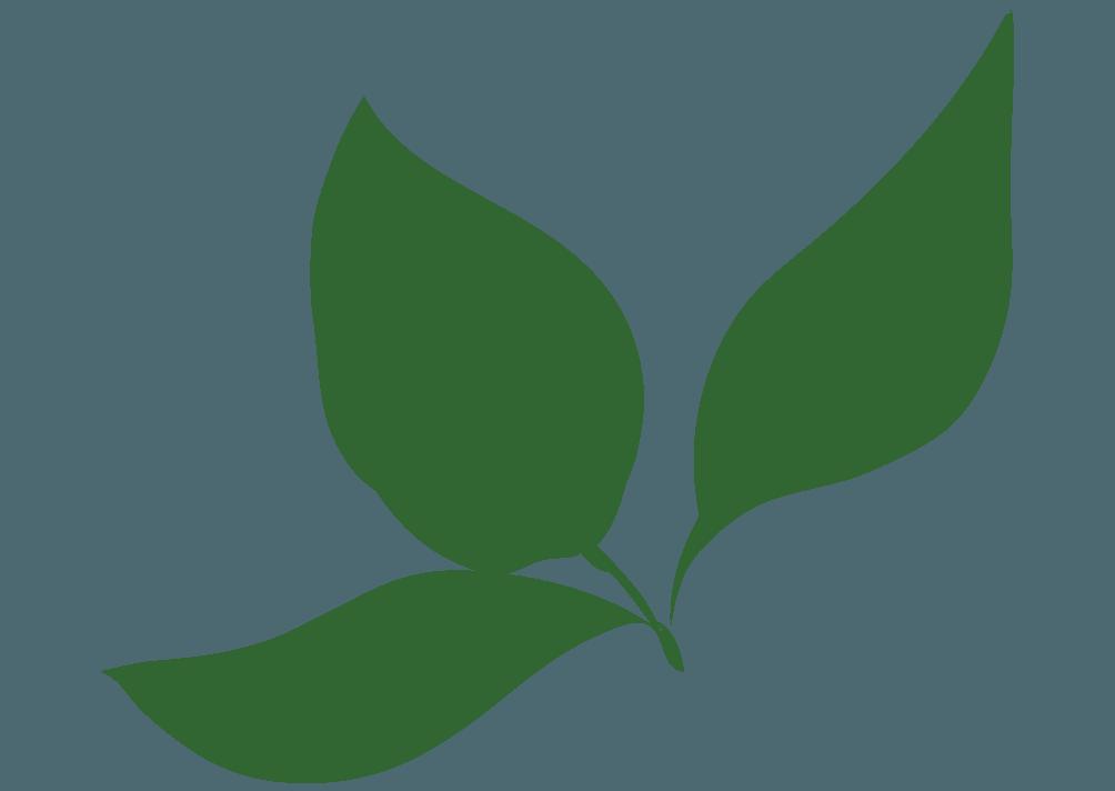 みつまたに生える葉っぱのイラスト