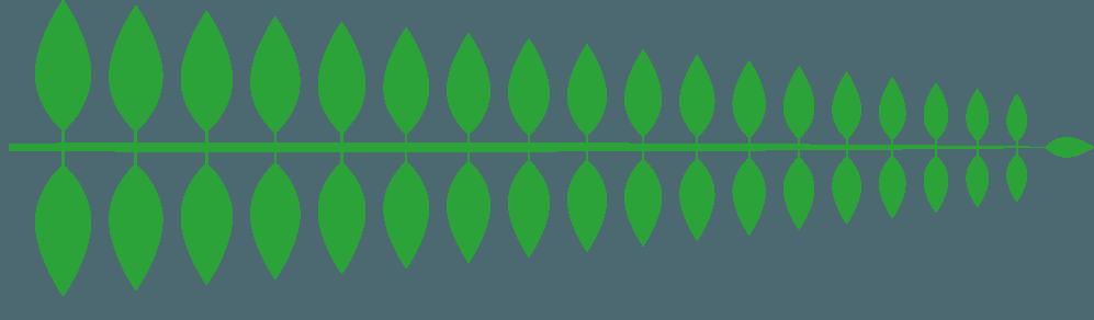茎ありの葉っぱ直線イラスト