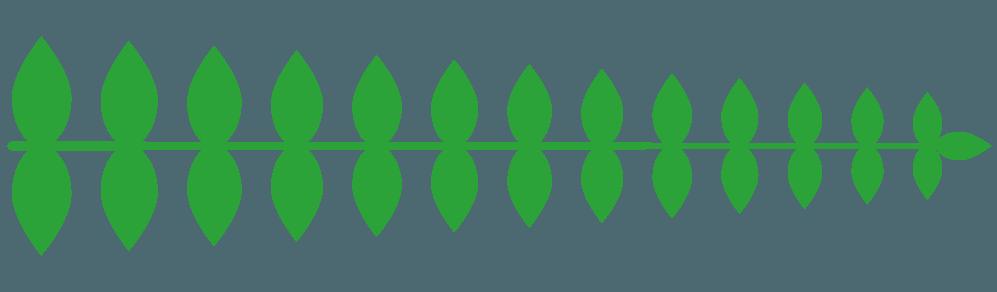 茎なしの葉っぱ直線イラスト
