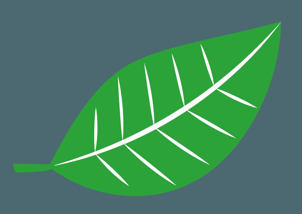葉脈がくっきりした可愛い葉っぱのイラスト