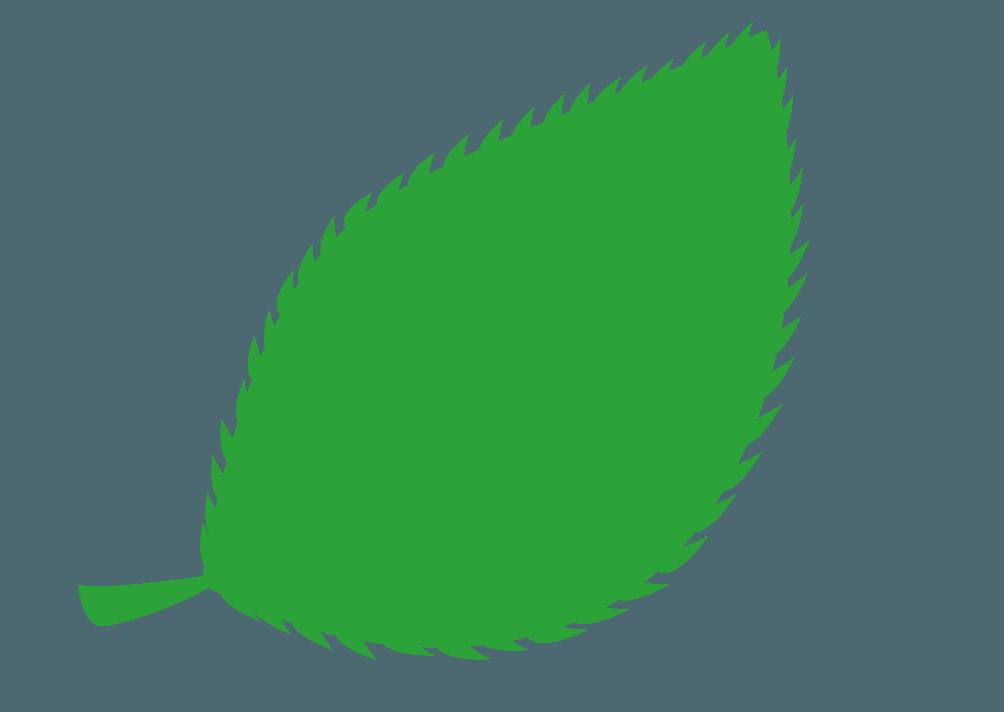 ギザギザの葉っぱのイラスト