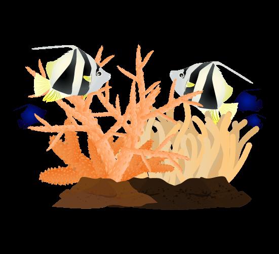 ハタタテダイと珊瑚のイラスト