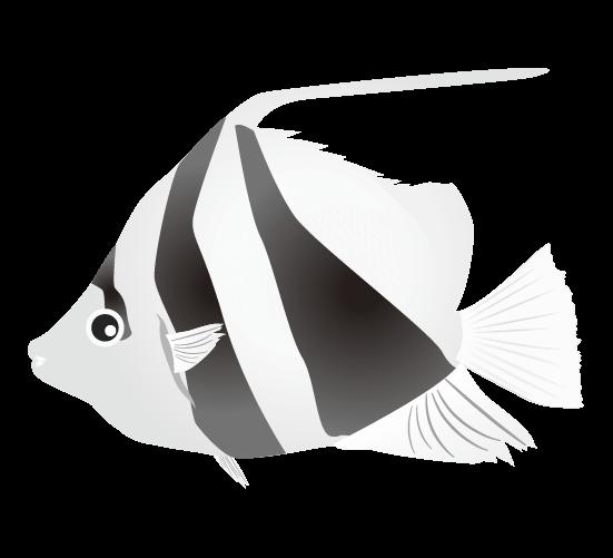 白黒のハタタテダイのイラスト