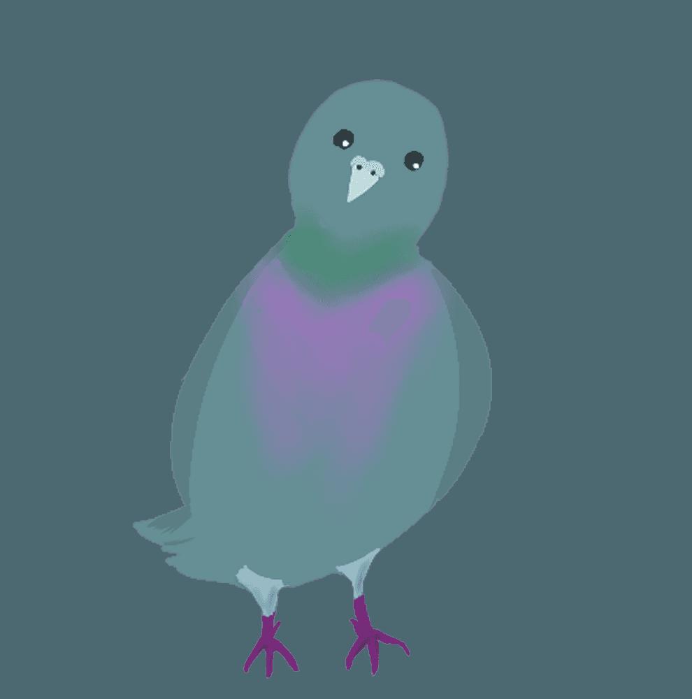 首をかしげる鳩イラスト