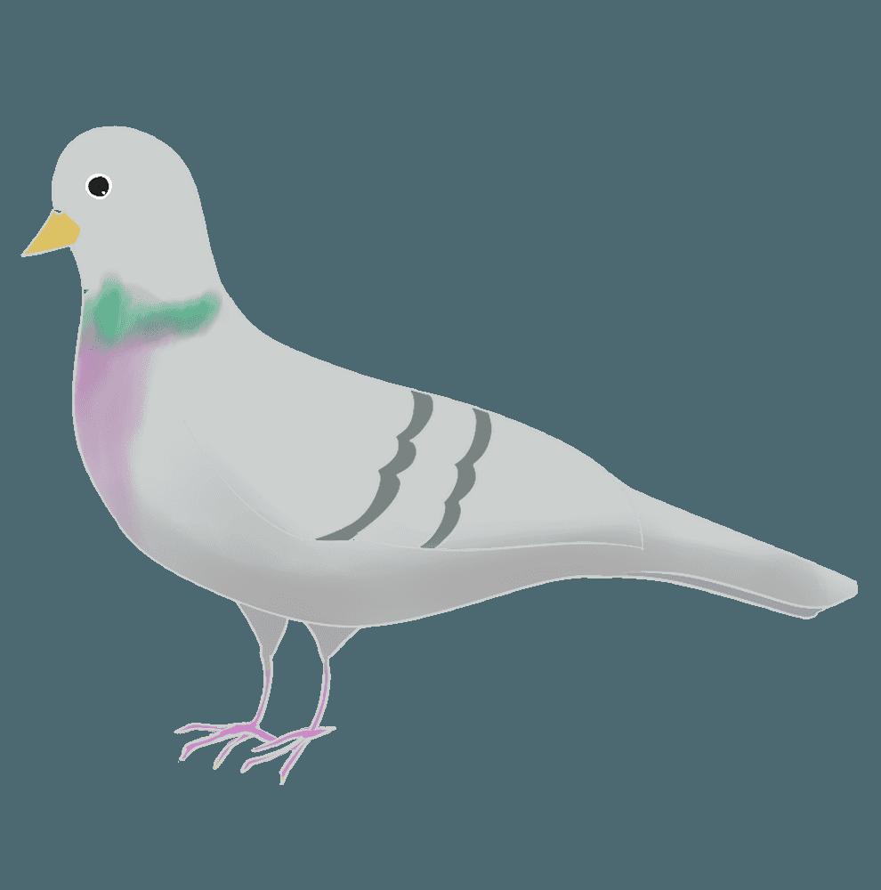 野鳩のイラスト