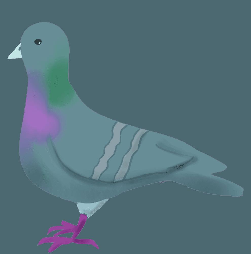きょとんとした野鳩イラスト