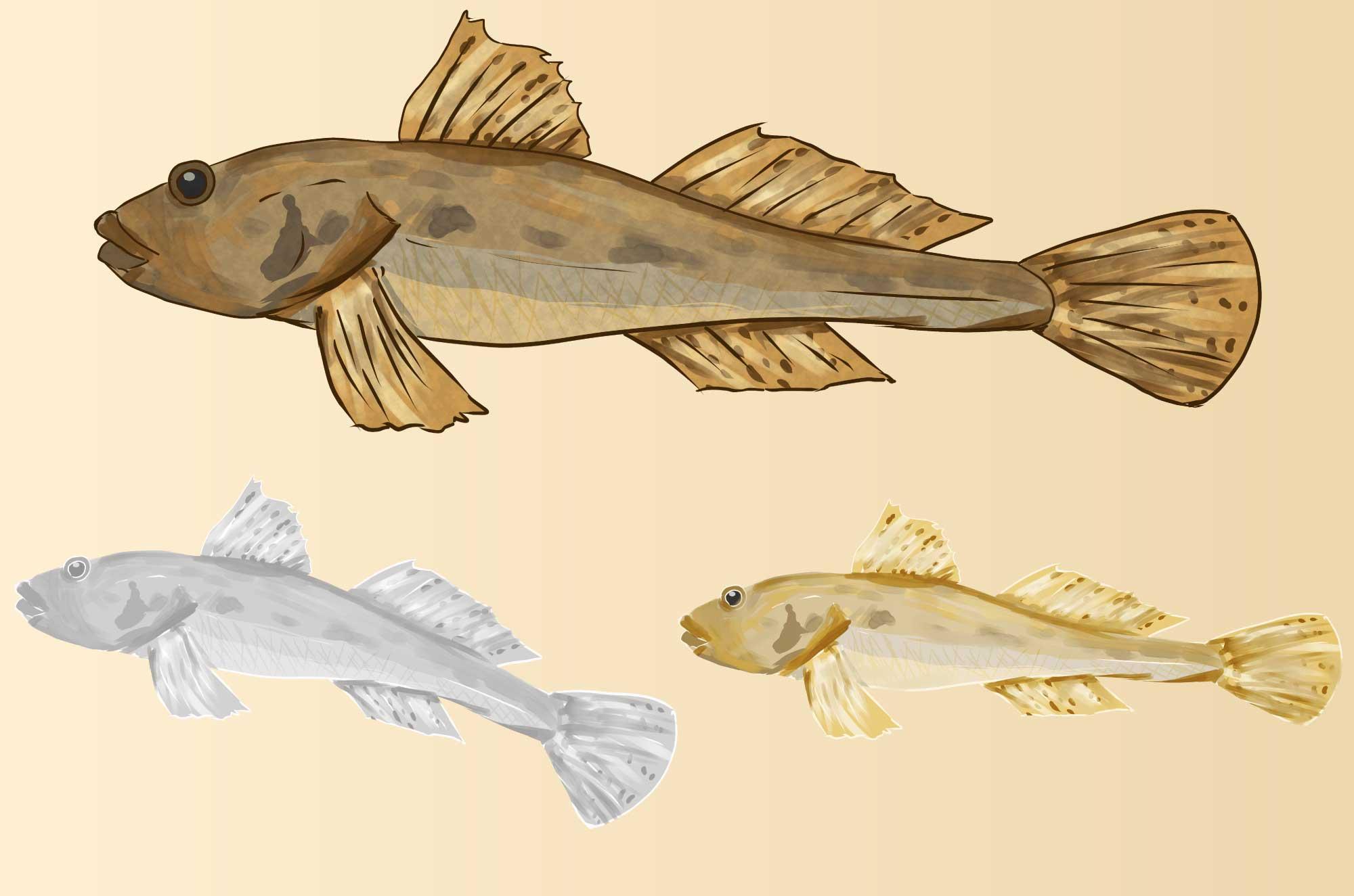 ハゼのイラスト - 和風の墨絵・水彩の魚の無料素材