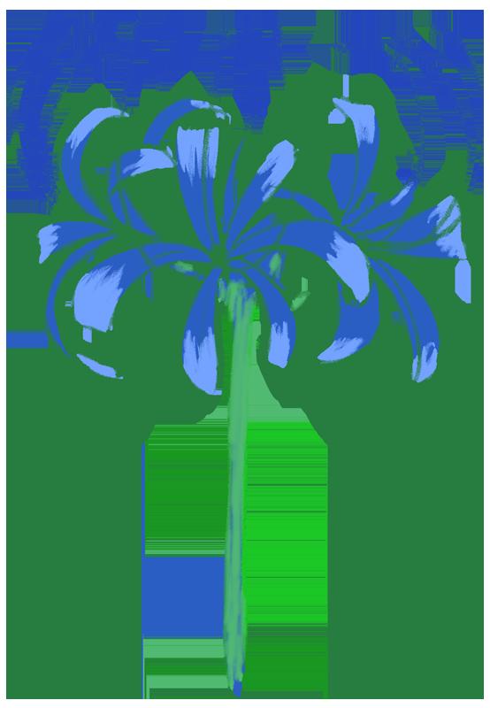 青い彼岸花のイラスト
