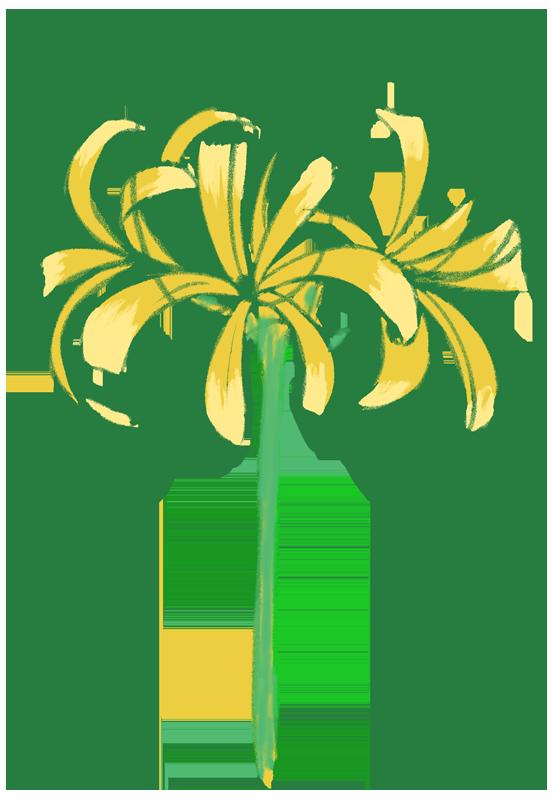 黄色の彼岸花のイラスト