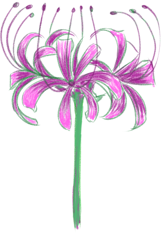 紫の彼岸花のイラスト