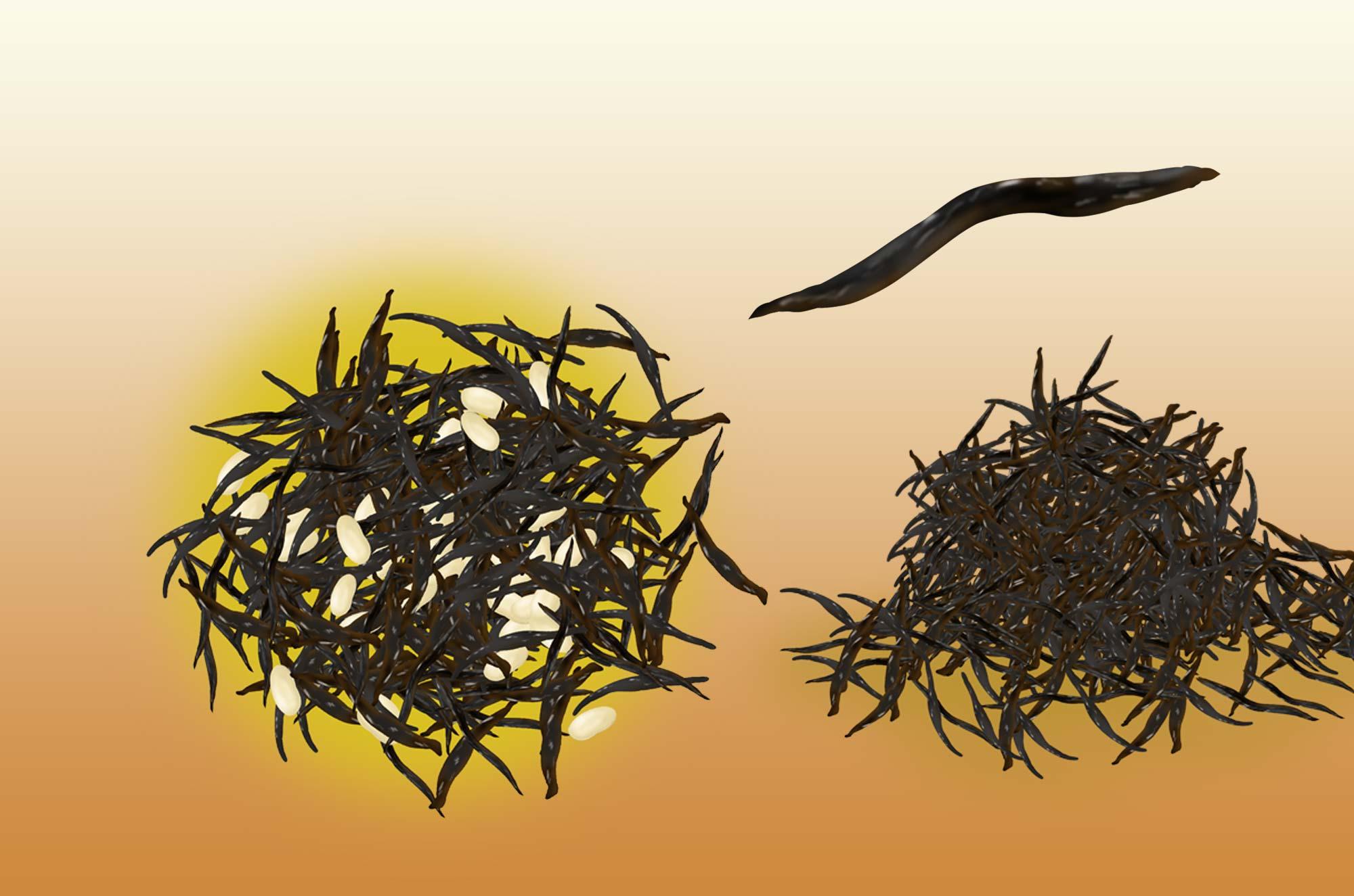 ひじきのイラスト - 栄養たっぷりの海の海藻無料素材