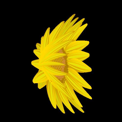 ひまわり花びら(横右)のイラスト