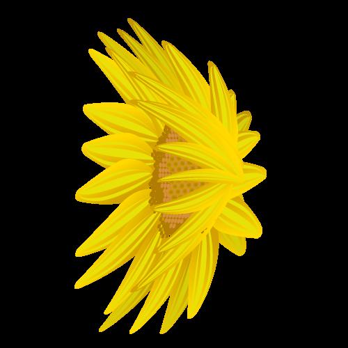 ひまわり花びら(横左)のイラスト