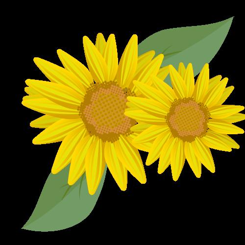 ひまわりの花びらと葉のイラスト