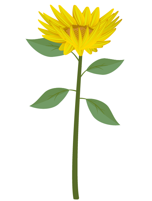 ひまわり(真上)のイラスト