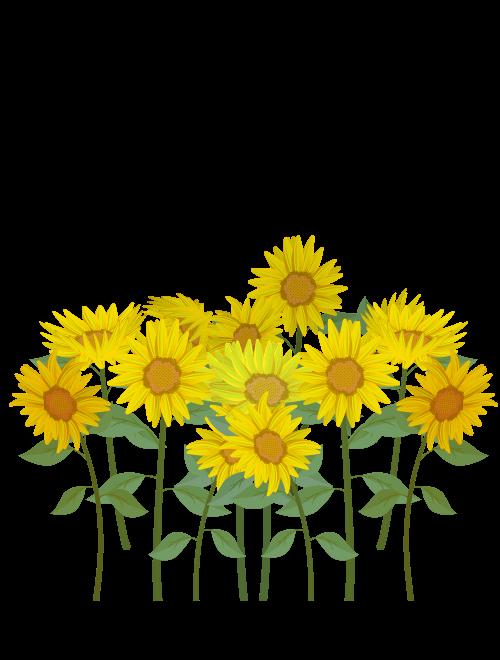 咲き乱れるひまわりのイラスト