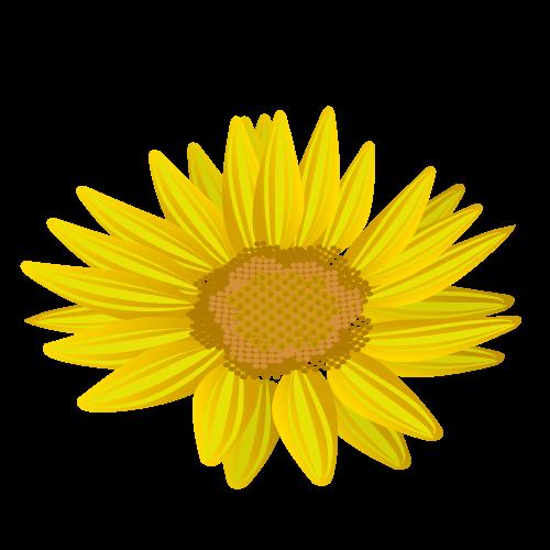 ひまわり花びら(上)のイラスト