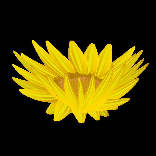 ひまわり花びら(真上)のイラスト