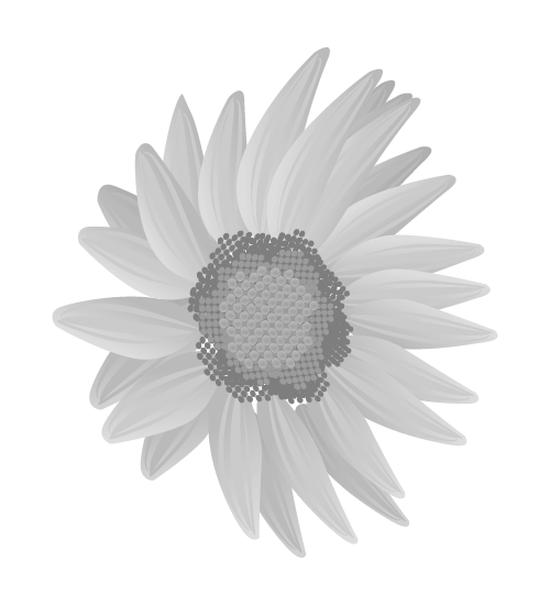 白黒ひまわりのイラスト14
