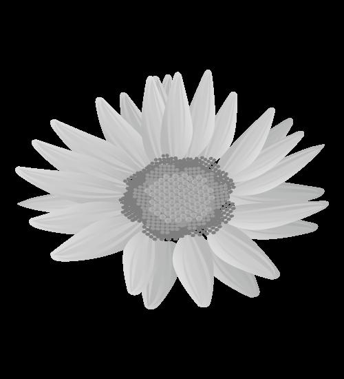 白黒ひまわりのイラスト15