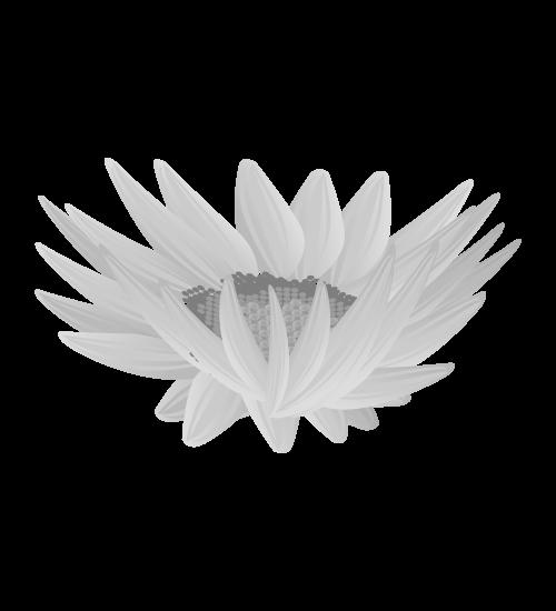 白黒ひまわりのイラスト16